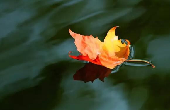 立秋:清风似雨余 迎扇暑先除